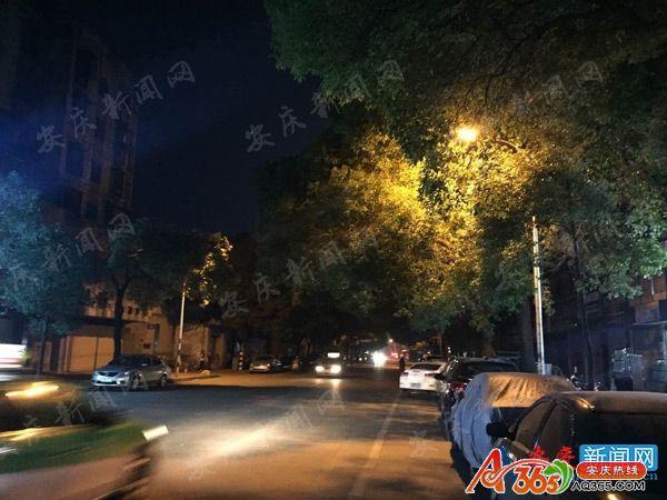 """行道树茂盛 路灯被""""蒙眼"""" 希望有关部门尽快修剪"""